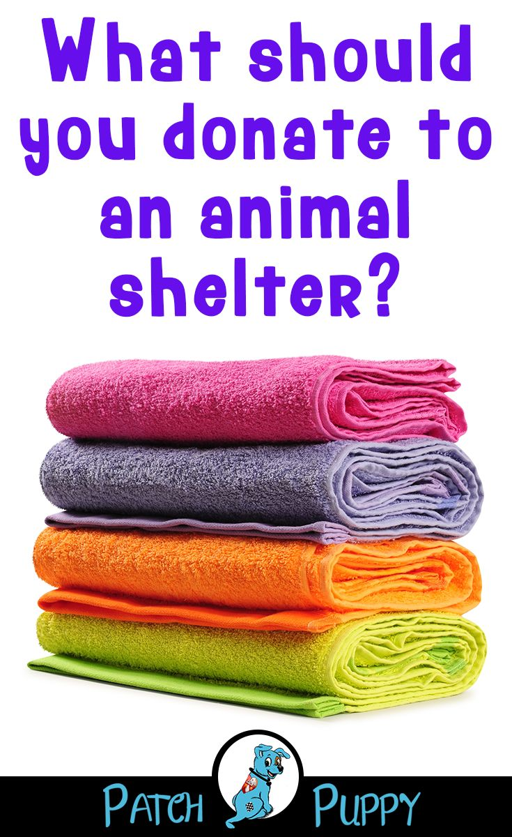 Things to Donate to Animal Shelters, The Dos and the Most