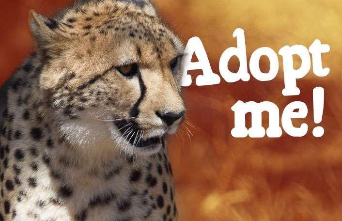 Cheetah Facts & Information - Monarto Zoo