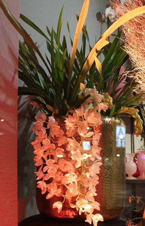 ber ideen zu ananas pflanzen auf pinterest ananas aus blattschopf ziehen kartoffeln. Black Bedroom Furniture Sets. Home Design Ideas