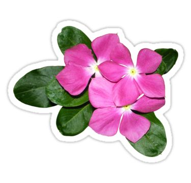 Pink Flowers with Leaves Sticker by StickerNuts