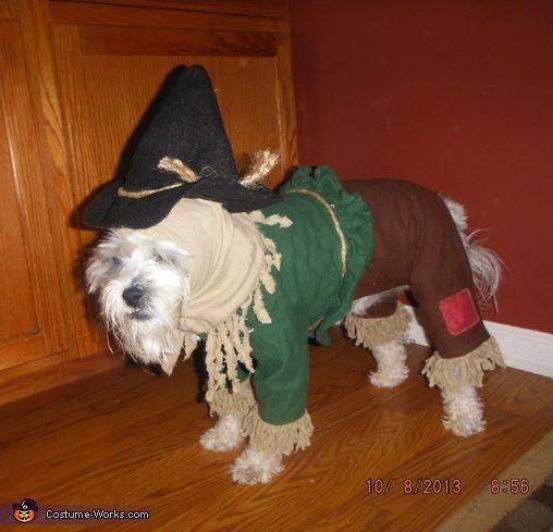 Cutest Scarecrow - 2013 Halloween Costume Contest