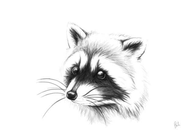 raccoon Art Print by Julia Bramer | Society6