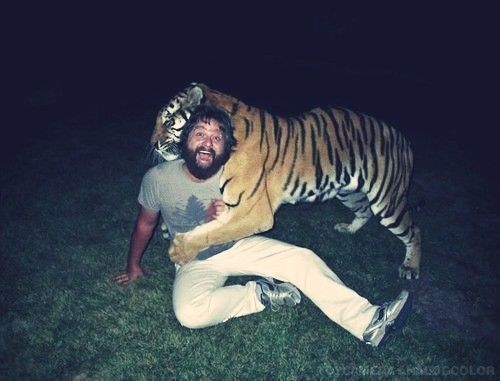 Alan: Cat Paw, Peppers, Best Friends, Cinnamon, Best Movie, Zach Galifianakis, Panthera Tigri, Tigers, The Hangover
