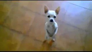 videos de risa - YouTube