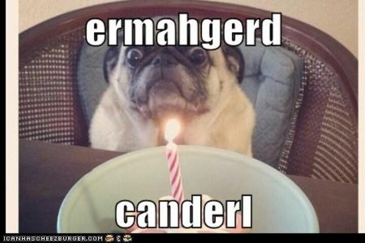 835560dfc4a96db5ee4b4e3c73f38ad8 birthday pug birthday cards ermahgerd birthday pug (via cheezburger) funny pinterest,Ermahgerd Birthday Meme