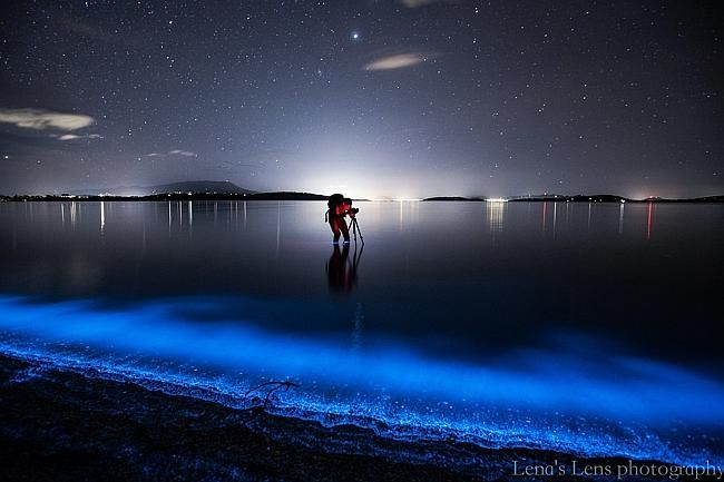 Sea Sparkle lights up Tasmanian beaches. Bioluminesence, South Arm, Southern Tasmania. Picture: Leena Wisby