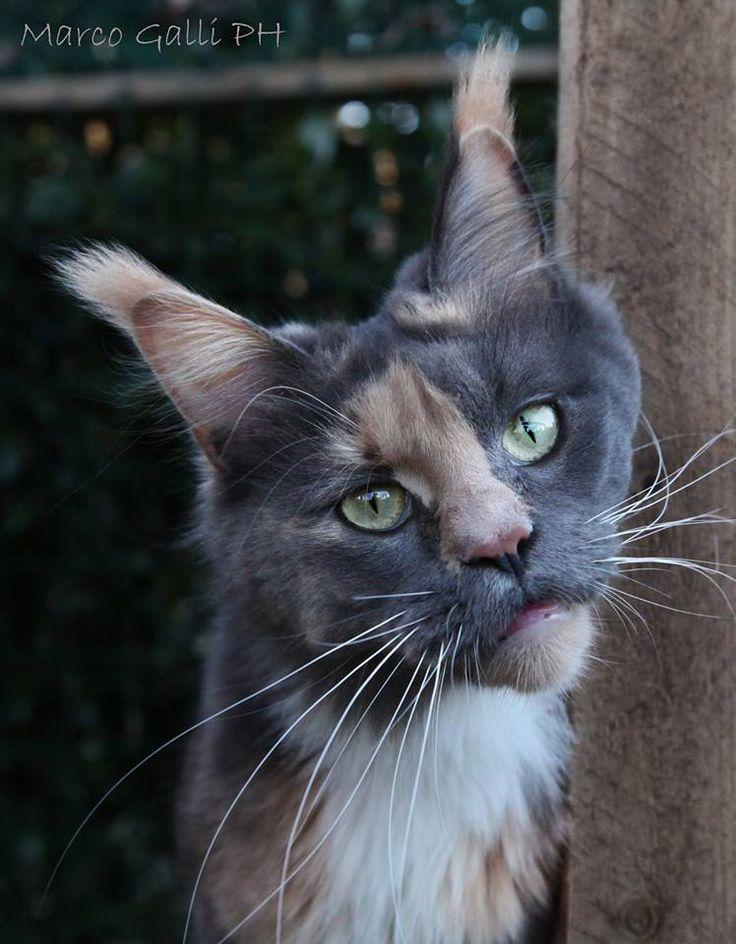 © copyright Marco Galli. Con Gatto Sidney. galli Marco il fotografo dei gatti. CLICCA QUI https://www.facebook.com/ilgatto72?ref_type=bookmark