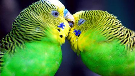 Wallpaper Desktop Background Bird (9)