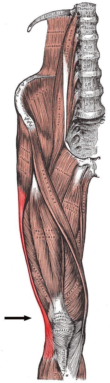 Running writings: Injury Series: Biomechanical solutions for iliotibial band (IT band) syndrome / ITBS