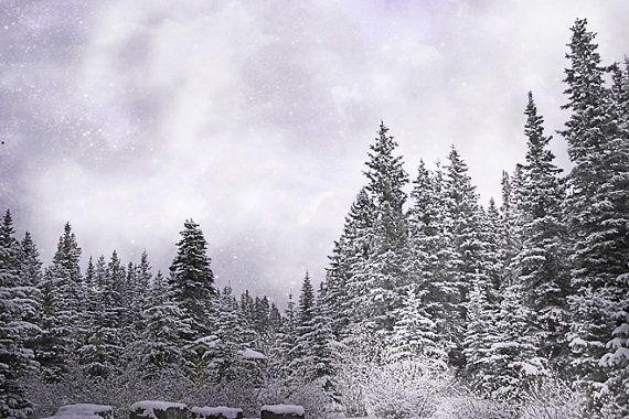 Bosque encantado fotografía Print 11 x 14 Fine Art rocosas canadienses Banff desierto Woodland paisaje invernal fotografía Print.