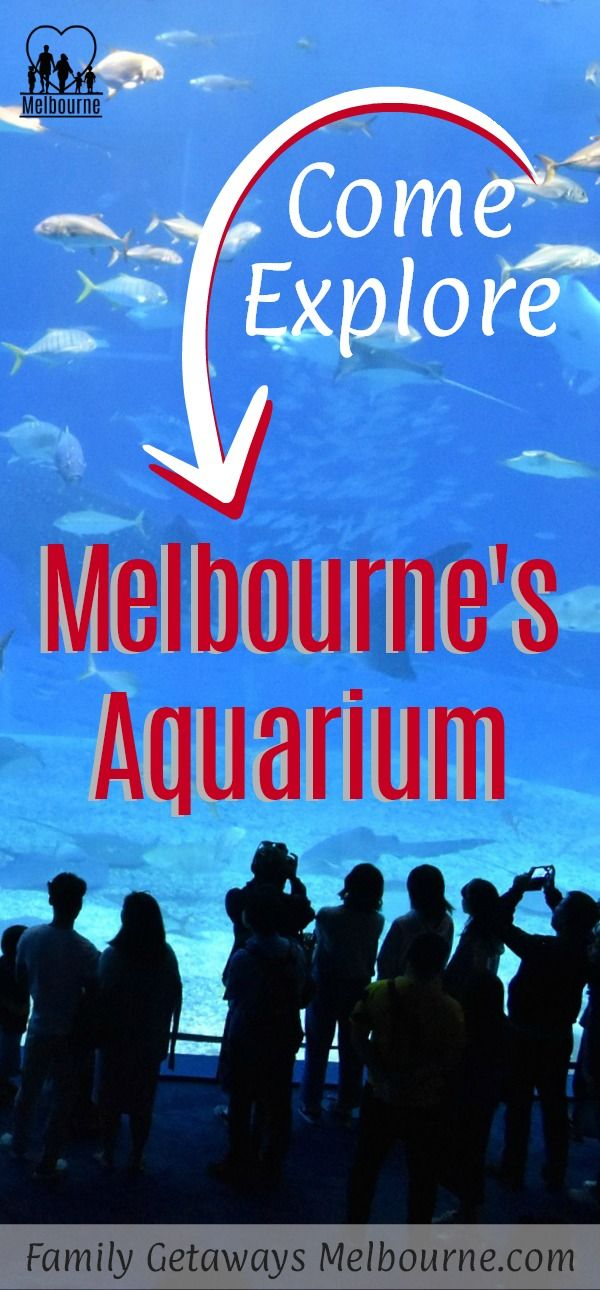 Come check out the Melbourne Aquarium right in the heart of the city. There are amazing creatures such as the moray eels, giant crabs, huge scary sharks, delicate sea dragons, cuttlefish, neon jellyfish and a whole lot more. Just click onto the image for more information.