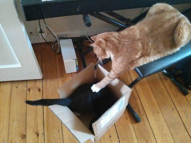 At sætte katte sammen
