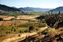 Viña Hacienda Araucano - Viñedo - Chile