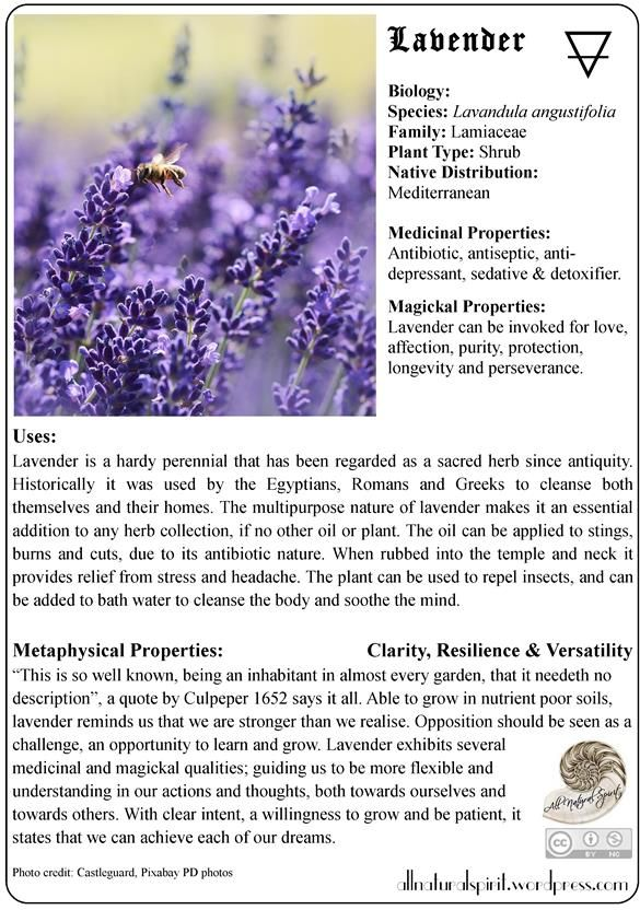 Tips on Herbal Lore& Magick: My first free herblore oracle card!Lavender is an asset to anycook, herb aficionado and naturalist. I have here a printable (can customise to any size yo…