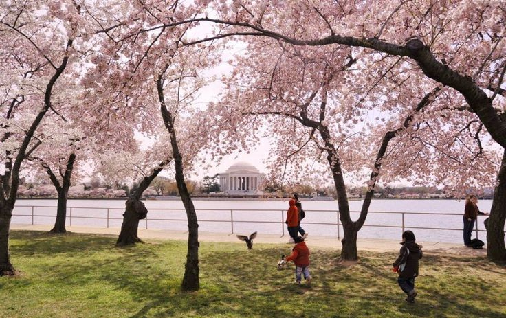 National Cherry Blossom Festival, Washington DC - Would love to go
