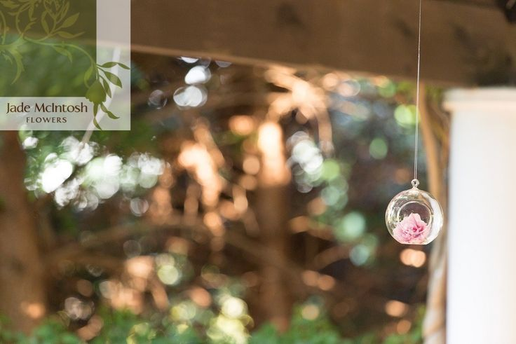 We love our hanging glass baubles as a beautiful way to display flowers or tea lights. Check them out in our hire gallery. www.jademcintoshflowers.com.au www.mmgphotocinema.com.au