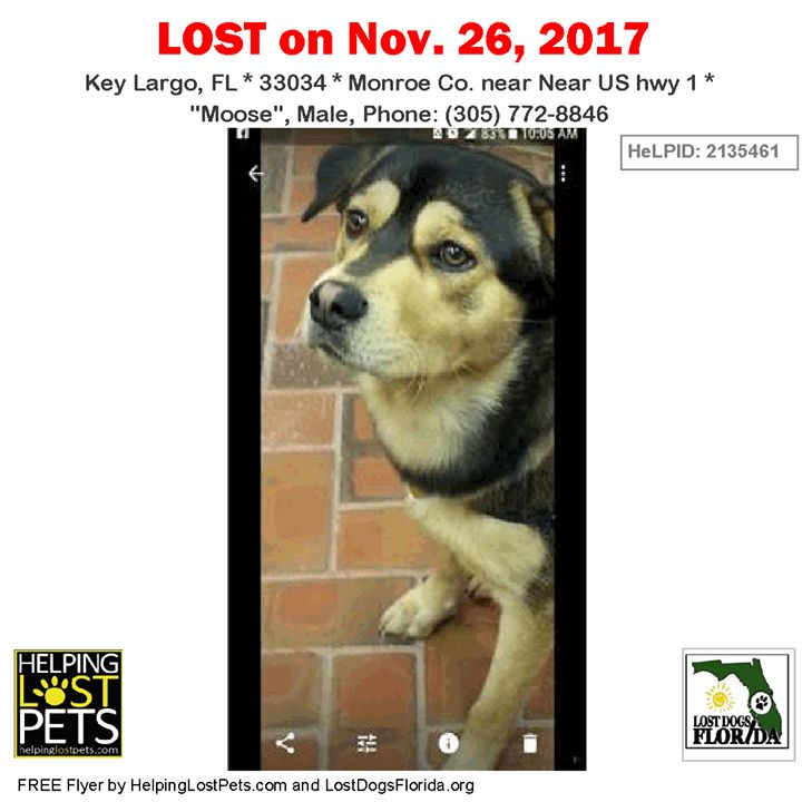 Have you seen this lost dog?  #LOSTDOG #Moose #KeyLargo (Near US hwy 1) #FL 33034 #Monroe Co.  #Dog 11-26-2017! Male #GermanShepherd Dog / #ChowChow Mix Black / Tan/  Phone: (305) 772-8846  Medical: Shots current but had a seizure the night before he was taken  We came home from church and our dog was gone. Neighbor said he saw him in a truck workers that came to restore cable after hurricane Irma. We are trying to track down who might have stole our dog.  More Info Photos and to Contact…