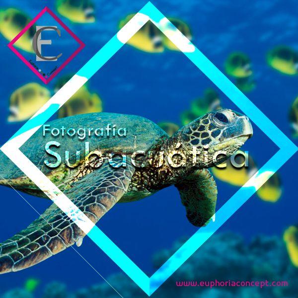 La fotografía subacuática es una modalidad muy practicada en el buceo deportivo y en el estudio de la biología marina. #fotografía #profesional #negocio #empresas #emprendedor #emprender #negocio #trabajo #diseño #startup #México #iluminación #cámara #Sony #nikon #cannon #Euphoria #Concept #subacuatica