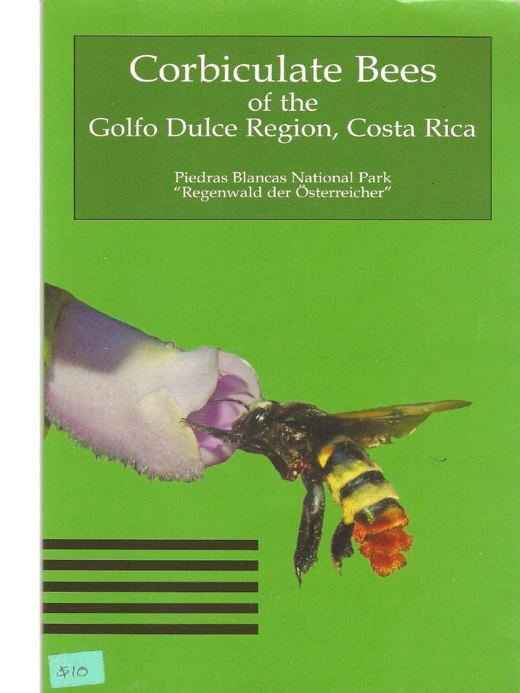 ISSUU - Bees Region Golfo Dulce by meliponicultura apicultura