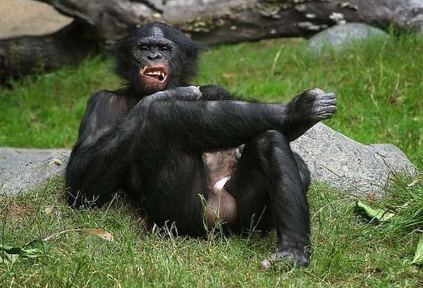 Fuck a monkey-3090
