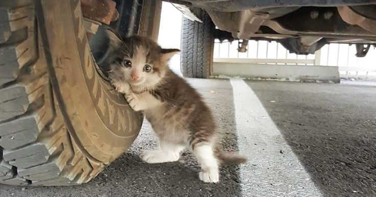 A Guy Found A Scared Kitten Under A Truck And Just Couldn't Say No To Her - http://www.villagevetanimalclinic.com/a-guy-found-a-scared-kitten-under-a-truck-and-just-couldnt-say-no-to-her/