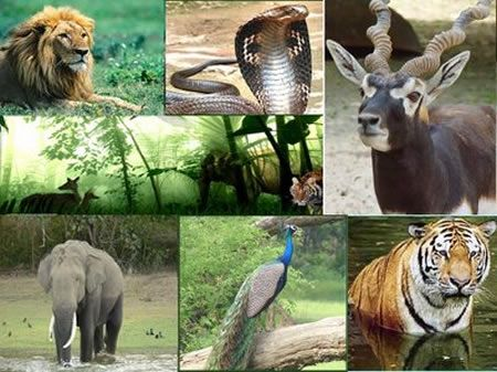 India Wildlife Tour an Incredible and Unimaginable Experience