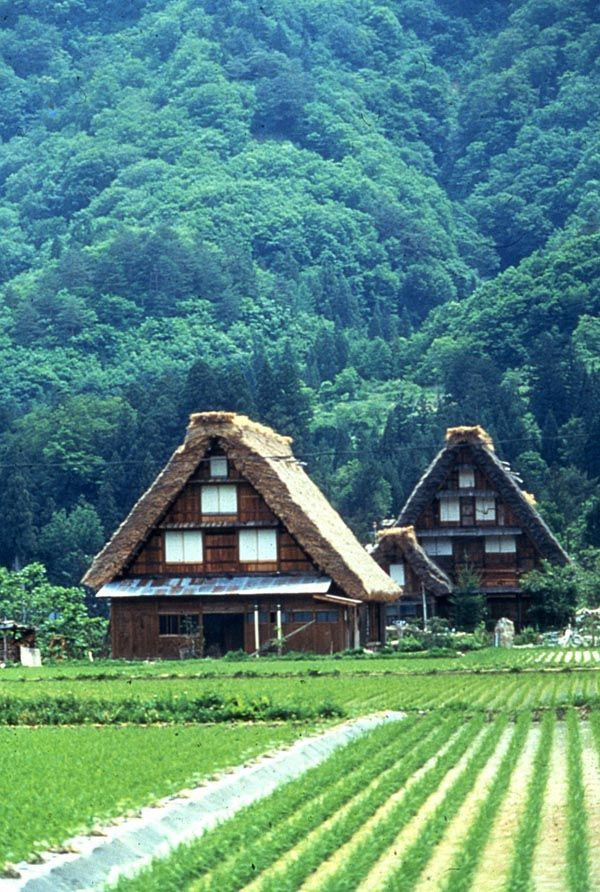 Thatched gassho-zukuri (合掌造り) farmhouses of the historic village, Shirakawa-go (白川郷), in the Gifu Prefecture, Japan