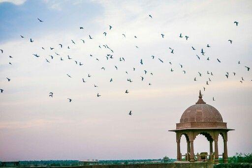 Khimsar,India | Stories by Joseph Radhik