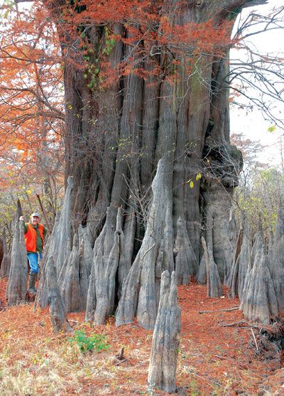The 10 Best Natural Wonders In Mississippi