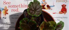 Mes petites adresses de tissus originaux . Plutôt que de disperses les infos dans des posts, voici (bientôt) réunies les adresses de ventes de tissus originaux : Michael Miller, Kaffe Fassett, Free spirit, Yui Kokeshi, Kokka, Alexander Henry… Uniquement sur Paris (nouveau) ! Du tissu japonais...