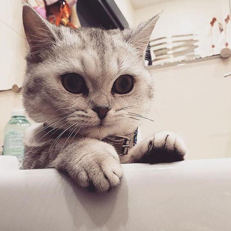 #kucingbikingemes ini kiriman dari : @kitt_delli    punya #kucingbikingemes juga? follow dan tag @kucingbikingemes  jangan lupa pakai #kucingbikingemes   via #catsofinstagram #cat #cats #catofinstagram #cat_of_instagram #catstagram #catsoftheworld #catslover #catgram #catagram #catslife #kucing #kucingku #kucinglucu #kucingsaya #kucingimut