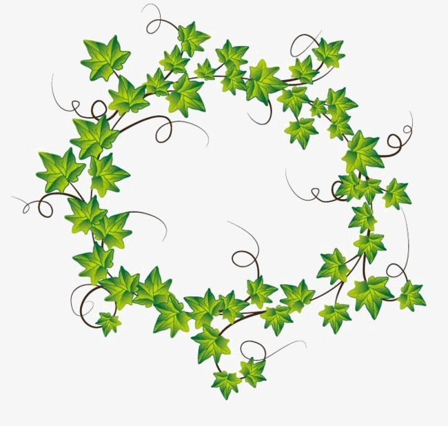 Ivy Wreath, Plant, Green, Ivy PNG Transparent Clipart Image and ...