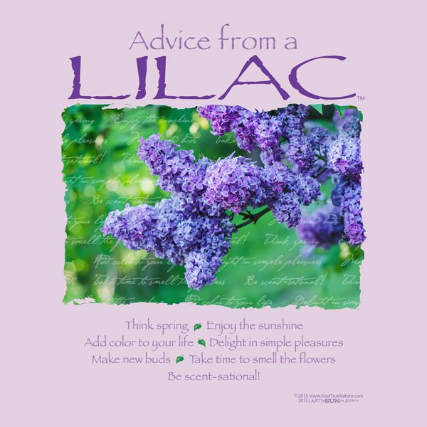 aDViCe FRoM a LiLaC