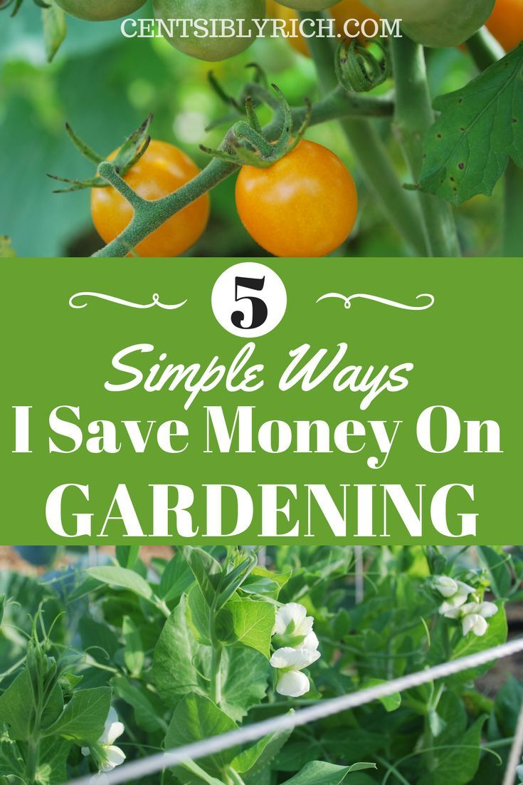 Gardening Can Save You A Ton Of Money! Here Are Some Easy Ways I Save On  Supplies And Get The Most For My Money.
