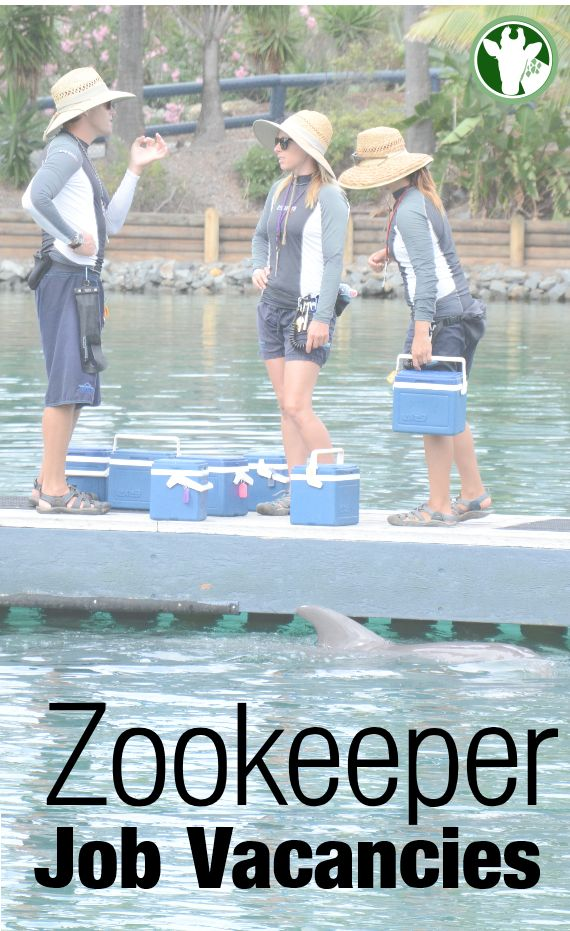 28 best images about zookeeping – Zookeeper Job Requirements