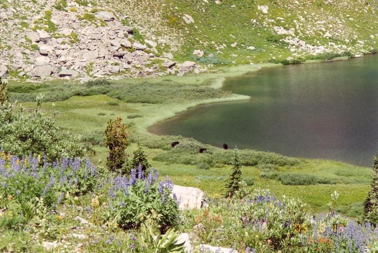 Moose Lake, Jackson Hole Wyoming