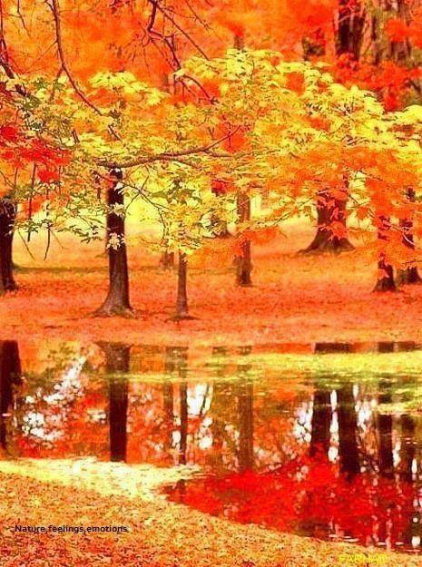 Fall..........