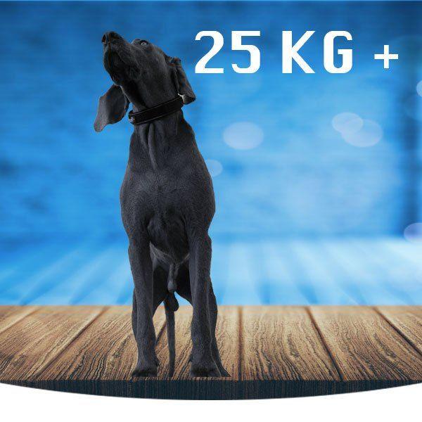 Stor (26kg +)