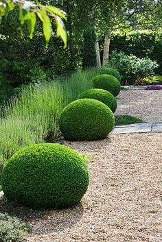 gravel, buxus ball +english lavender