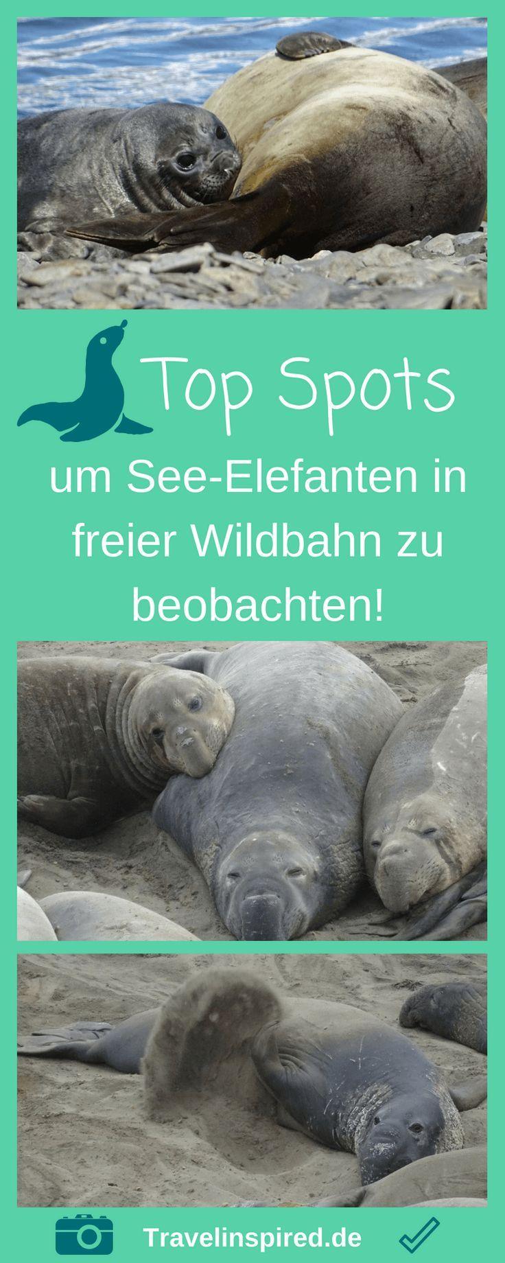 See-Elefanten beobachten - Top Spots | ️ Traumreiseziele ...