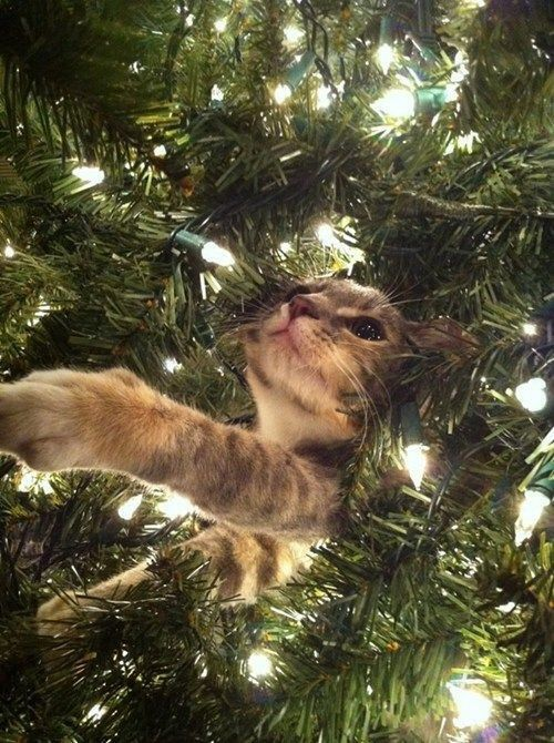Christmas Cat! My very favorite ornament!