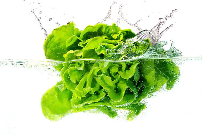 Food Focus: How to Clean and Store Lettuce