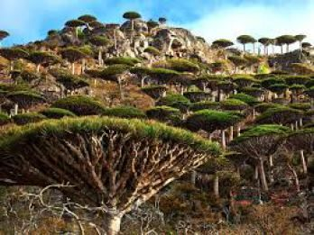 TOP 10 Spiritual Places with The Strongest Energy Field - Socotra Horn of Africa
