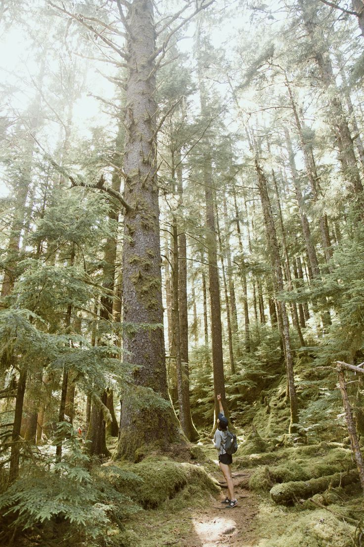 Tthe trail to the Pesuta shipwreck near Tlell, Haida Gwaii. Photo: Rachel Rilkoff