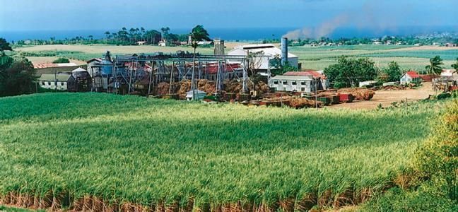 Land of sugarcane and home of the world's oldest rum. Yum! #Barbados http://on.fb.me/Liu9Xz