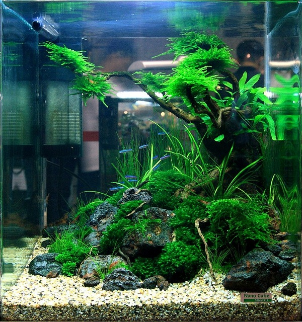 What to do with a cube... | AquaScaping World Forum