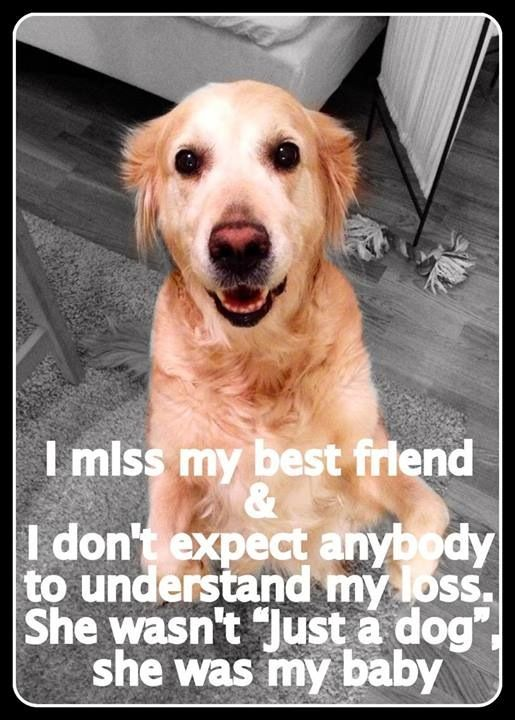 Miss all the babies I've lost over the years, even my foster babies.
