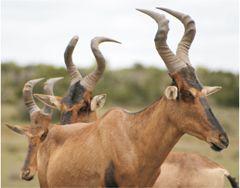Amazing horns!