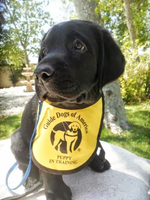 17 Best Images About Guide Dogs And Mobility Aids For The