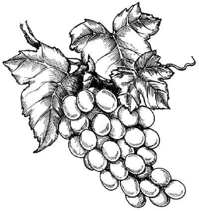 как нарисовать гроздь винограда поэтапно